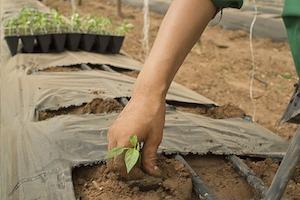Derecho Alimentario: Huertos Urbanos