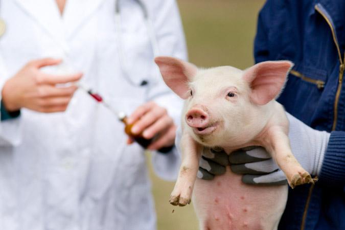 La nueva regulación del uso de antibióticos en animales destinados a la producción de alimentos desde el enfoque 'One Health'